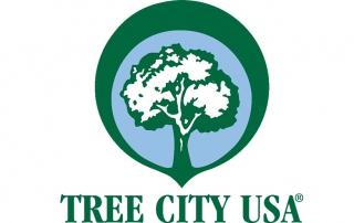 treecity